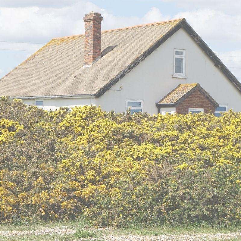 Hus med putsad fasad